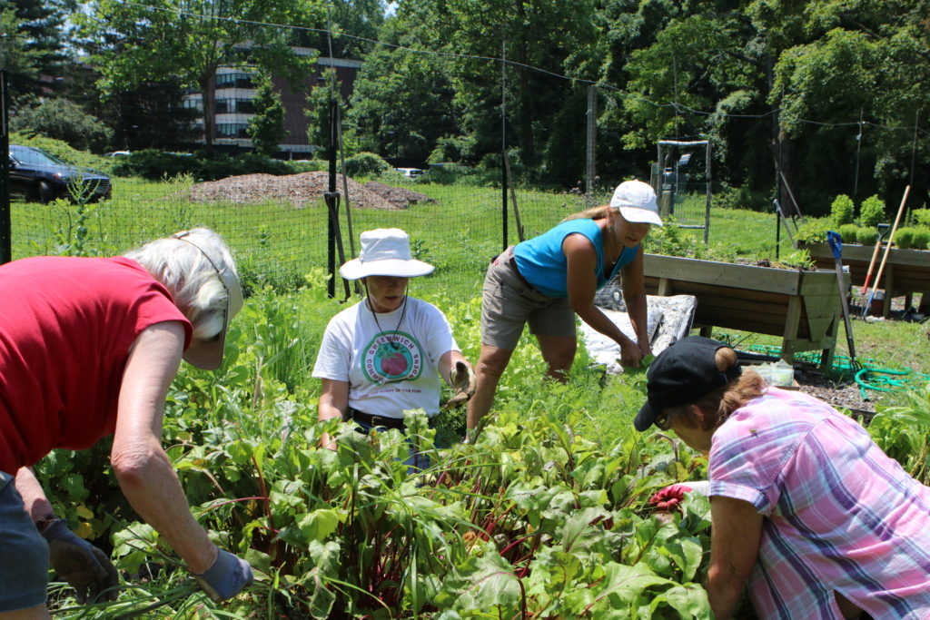 Various kinds of Community Gardens